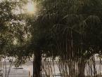 Bambus Rethelstraße